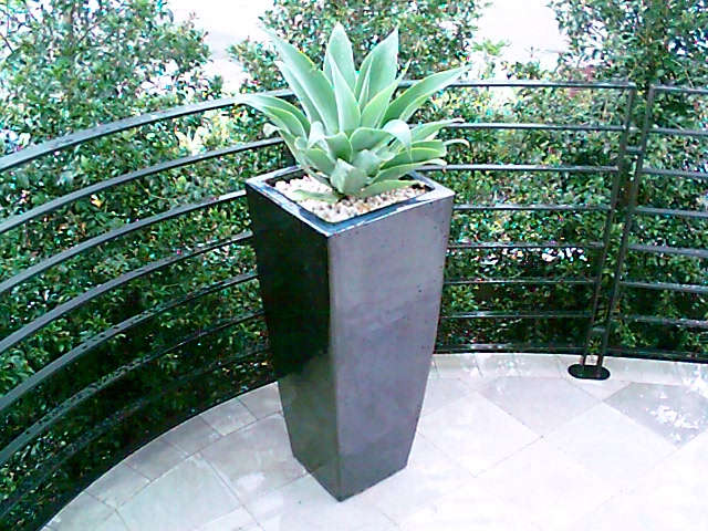 The balcony small space garden design potted landscapes for Small garden design sydney